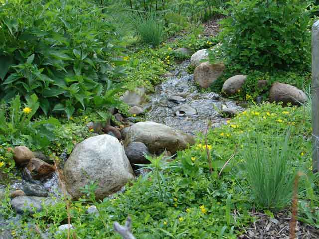 Stream side plantings